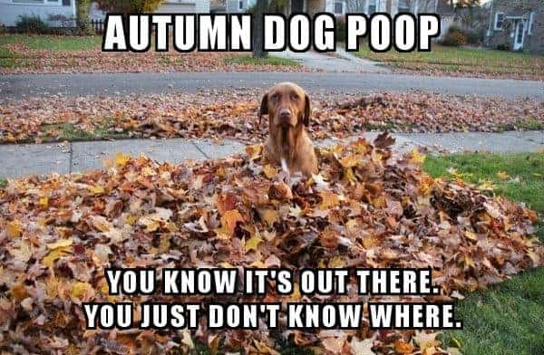 autumn dog poop