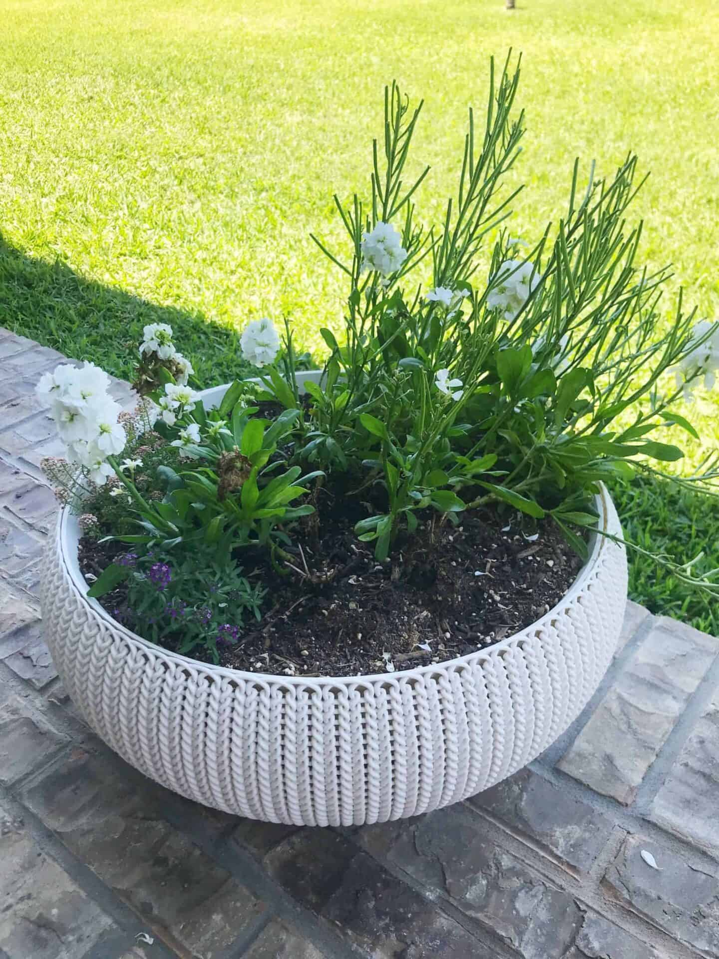 amazon removable planter with liner